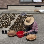 Old Japanese Woman Drying Seaweed